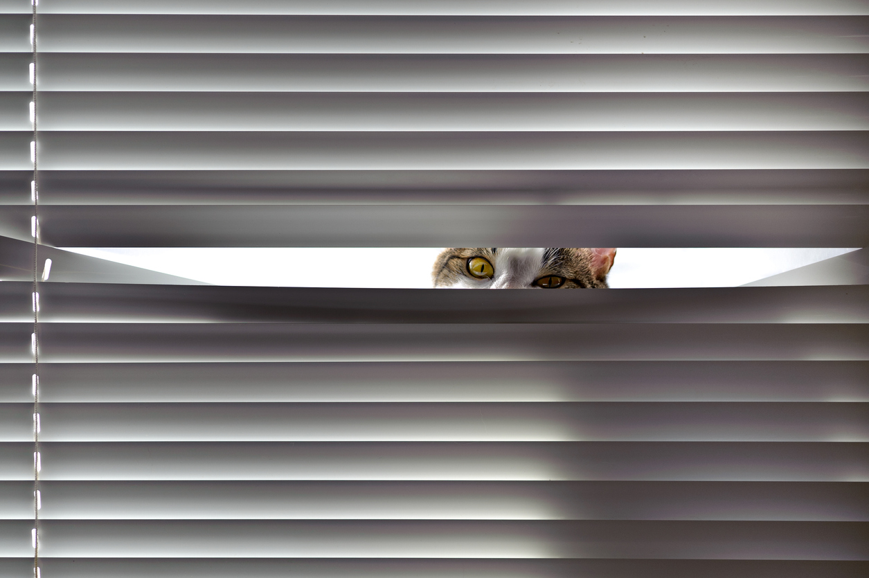 Best Window Blinds for Cat Owners